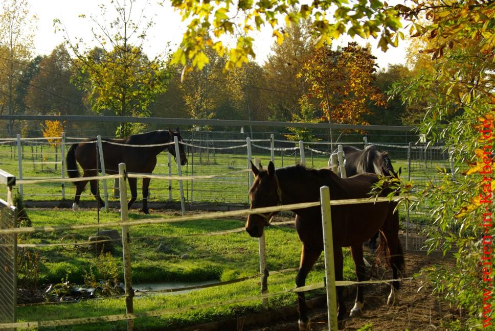 Führanlage für Pferde