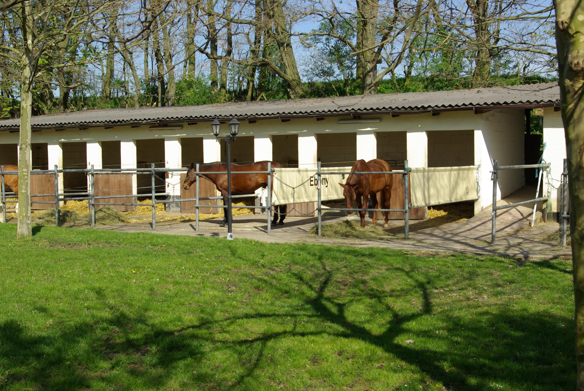 Pferdestall mit Aussicht ins grüne