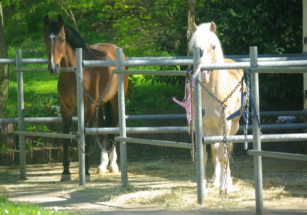 Pferdehaltung mit FN ***** Zertifizierung Karben im Norden von Bad Vilbel und Frankfurt am Main